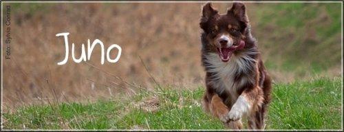 Aussie Juno